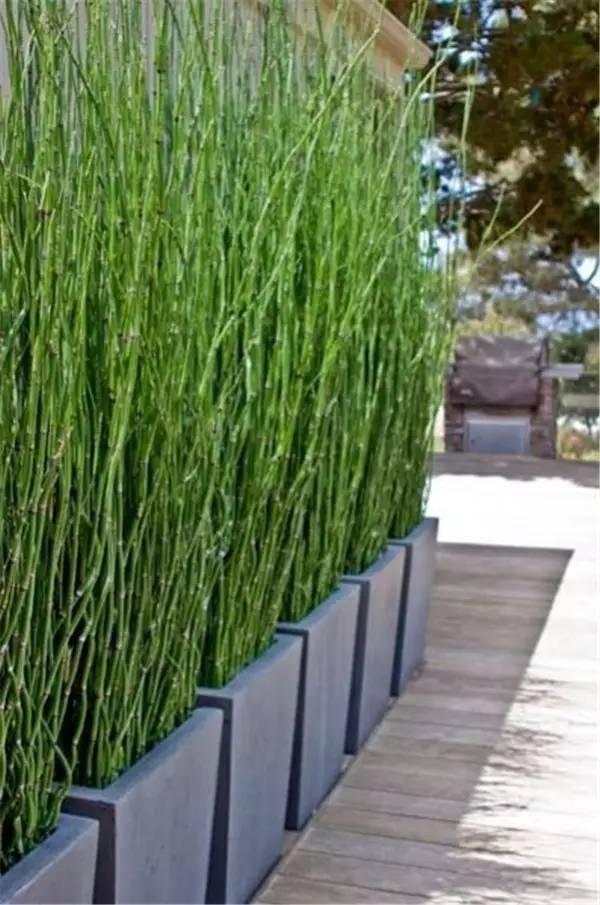 【家装】如果我家有个院子 围墙就这么设计! 家装,如果,我家,家有,院子 第11张图片