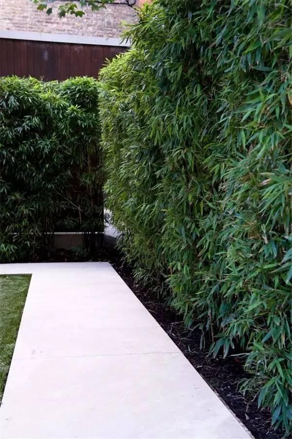 【家装】如果我家有个院子 围墙就这么设计! 家装,如果,我家,家有,院子 第18张图片