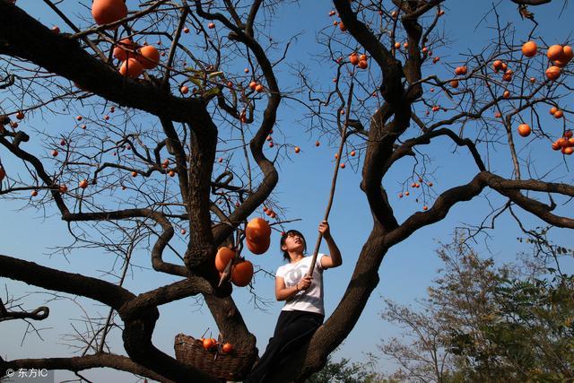 两性知识猴子上树_高中生物细胞知识树_两性生活知识