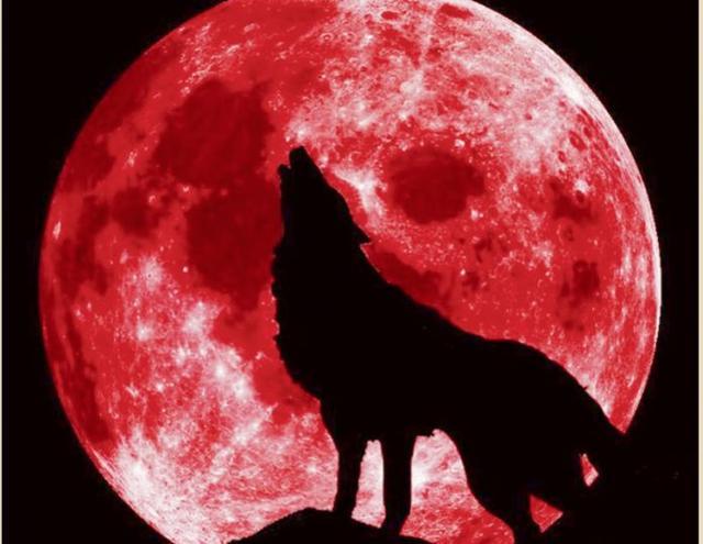 错过等三年!加拿大下周将出现超级血狼月全食! 来这儿,大气层,错过,三年 第5张图片