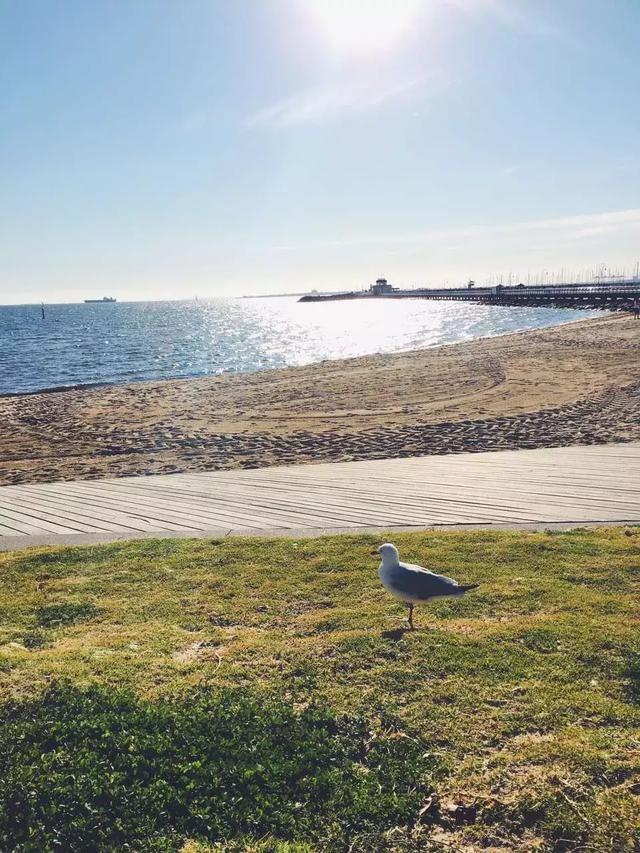 澳大利亚墨尔本「最美16KM海岸线」,TOP 5海滩散步+探店指南! ... 澳大利亚,利亚,墨尔本,最美,海岸线 第9张图片