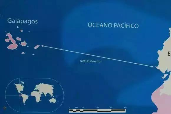 探索南美海洋保护区,潜下水的那一刻,才知道什么叫做海底世界 ... 探索,南美,海洋,海洋保护,海洋保护区 第4张图片
