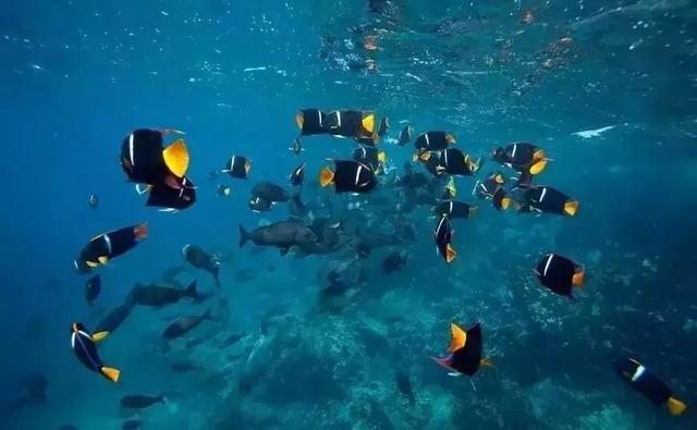 探索南美海洋保护区,潜下水的那一刻,才知道什么叫做海底世界 ... 探索,南美,海洋,海洋保护,海洋保护区 第10张图片