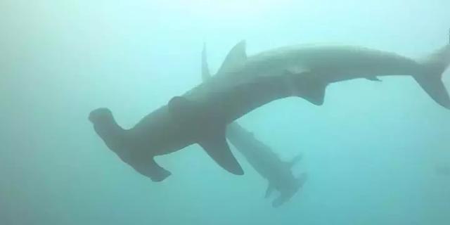 探索南美海洋保护区,潜下水的那一刻,才知道什么叫做海底世界 ... 探索,南美,海洋,海洋保护,海洋保护区 第11张图片