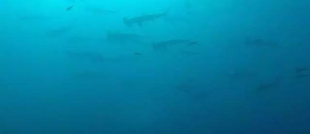 探索南美海洋保护区,潜下水的那一刻,才知道什么叫做海底世界 ... 探索,南美,海洋,海洋保护,海洋保护区 第13张图片