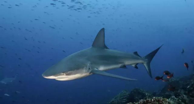 探索南美海洋保护区,潜下水的那一刻,才知道什么叫做海底世界 ... 探索,南美,海洋,海洋保护,海洋保护区 第19张图片