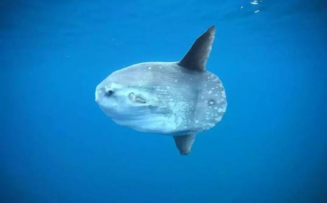探索南美海洋保护区,潜下水的那一刻,才知道什么叫做海底世界 ... 探索,南美,海洋,海洋保护,海洋保护区 第17张图片