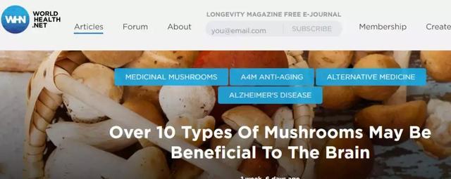 600位中国人亲身实验:每周吃蘑菇,或可缓解老年痴呆 我不认识你。,亲身,实验,每周 第11张图片
