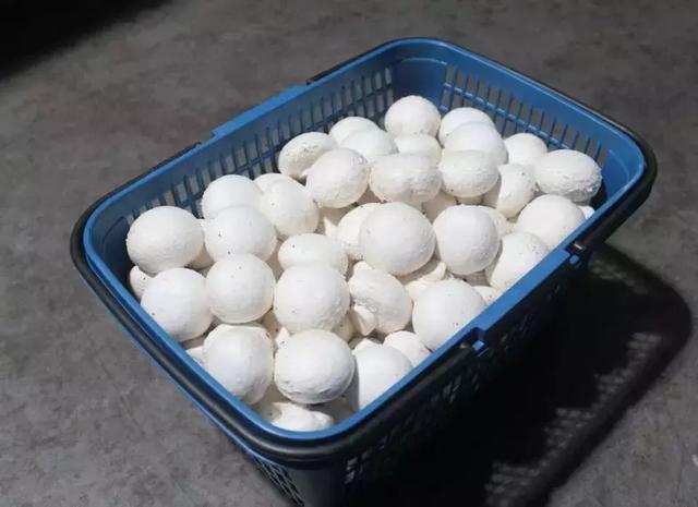600位中国人亲身实验:每周吃蘑菇,或可缓解老年痴呆 我不认识你。,亲身,实验,每周 第20张图片