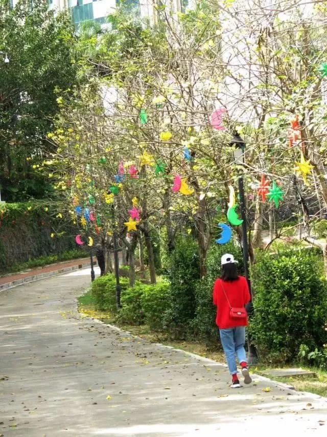 巴西国花在惠州绽放,美得不要不要的 阳光,铃木,巴西,国花,惠州 第15张图片