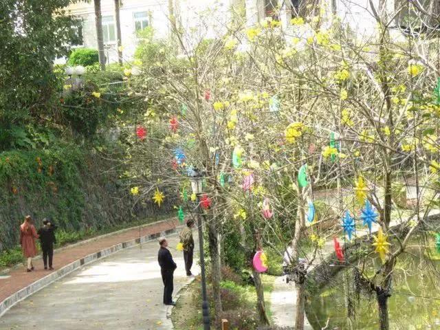 巴西国花在惠州绽放,美得不要不要的 阳光,铃木,巴西,国花,惠州 第14张图片