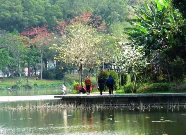 巴西国花在惠州绽放,美得不要不要的 阳光,铃木,巴西,国花,惠州 第19张图片