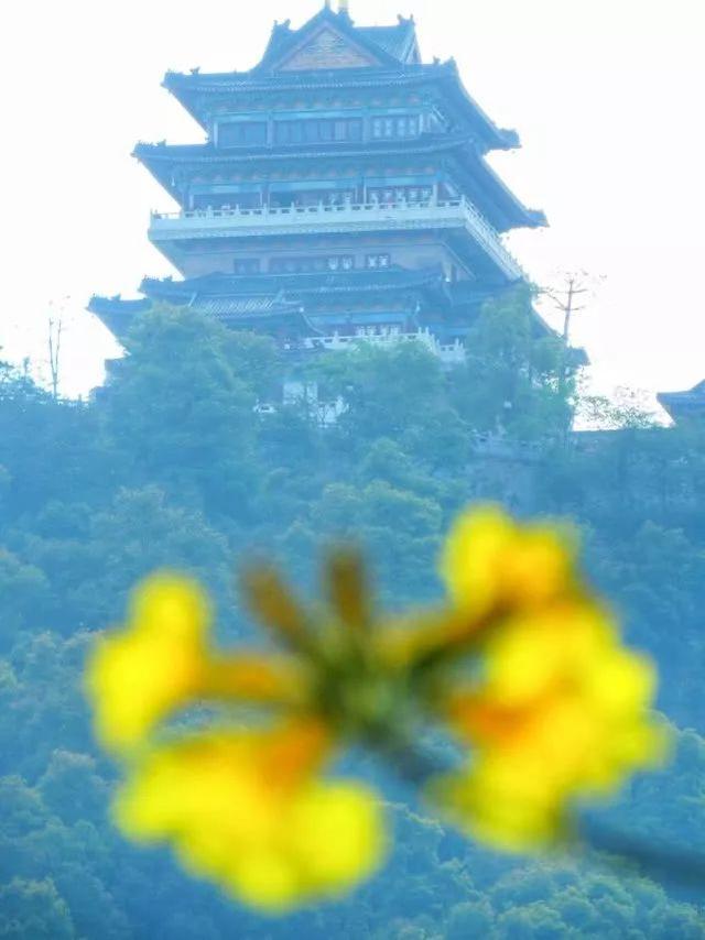 巴西国花在惠州绽放,美得不要不要的 阳光,铃木,巴西,国花,惠州 第25张图片