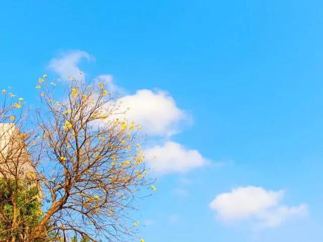 巴西国花在惠州绽放,美得不要不要的 阳光,铃木,巴西,国花,惠州 第33张图片