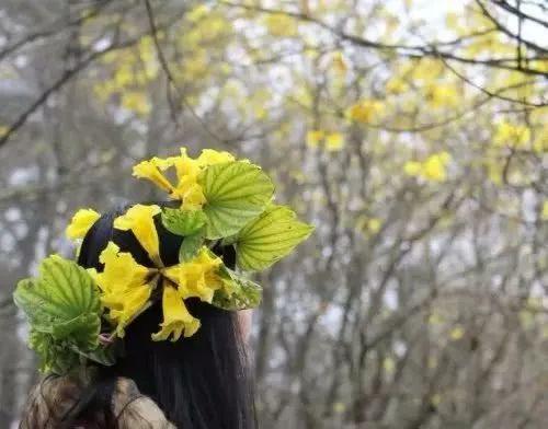 巴西国花在惠州绽放,美得不要不要的 阳光,铃木,巴西,国花,惠州 第46张图片