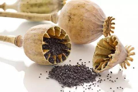 澳洲最热销面包被曝含有罂粟籽,吃了等于吸毒 民以食为天,昧心,罂粟籽,澳洲,热销 第2张图片