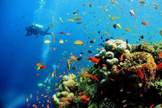马来西亚最适合潜水的6个地方,少去一个,人生都不算圆满! ... 马来西亚,西亚,适合,潜水,个地方 第7张图片