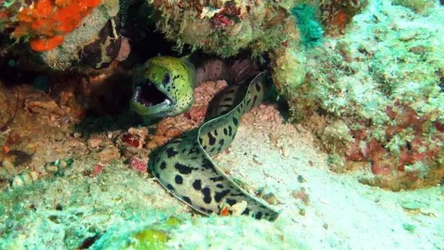 马来西亚最适合潜水的6个地方,少去一个,人生都不算圆满! ... 马来西亚,西亚,适合,潜水,个地方 第14张图片