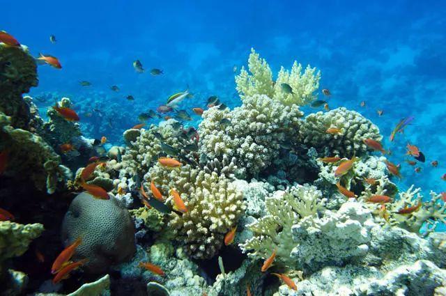 马来西亚最适合潜水的6个地方,少去一个,人生都不算圆满! ... 马来西亚,西亚,适合,潜水,个地方 第22张图片