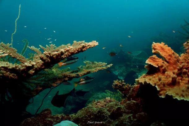 马来西亚最适合潜水的6个地方,少去一个,人生都不算圆满! ... 马来西亚,西亚,适合,潜水,个地方 第21张图片