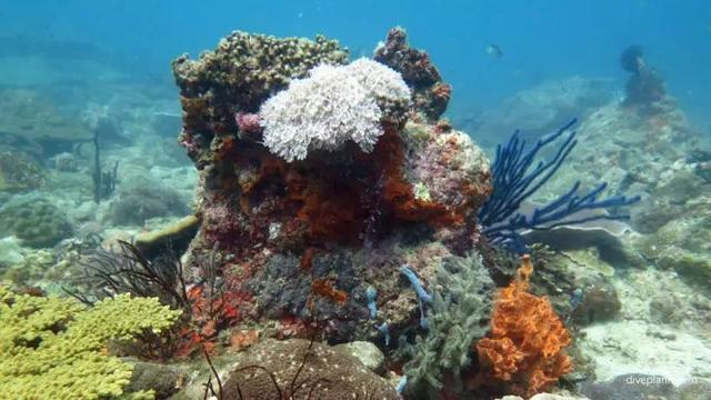 马来西亚最适合潜水的6个地方,少去一个,人生都不算圆满! ... 马来西亚,西亚,适合,潜水,个地方 第20张图片