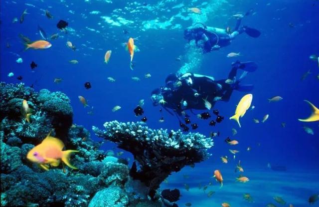 马来西亚最适合潜水的6个地方,少去一个,人生都不算圆满! ... 马来西亚,西亚,适合,潜水,个地方 第26张图片