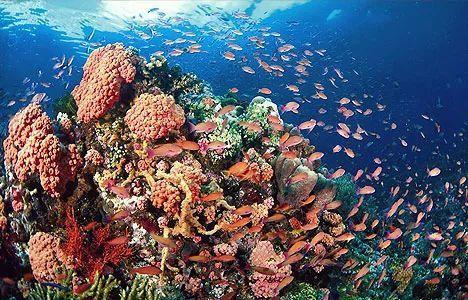 马来西亚最适合潜水的6个地方,少去一个,人生都不算圆满! ... 马来西亚,西亚,适合,潜水,个地方 第35张图片
