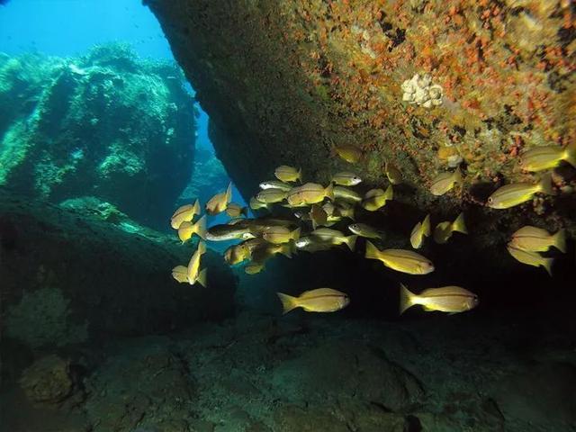 马来西亚最适合潜水的6个地方,少去一个,人生都不算圆满! ... 马来西亚,西亚,适合,潜水,个地方 第37张图片