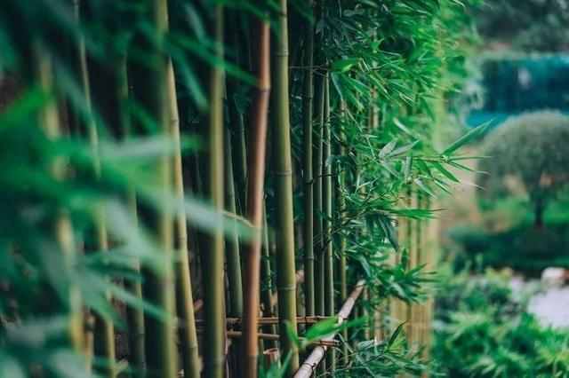 重庆,值得去的12个古镇 重庆,值得,喧嚣,都市,久了 第39张图片