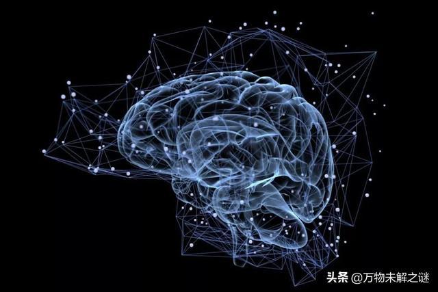 地球上的其他动物可以达到人类的智慧程度吗?为什么会不能? ... 利基,动物,其他,可以,达到 第1张图片