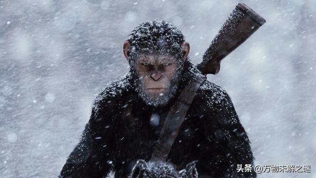 地球上的其他动物可以达到人类的智慧程度吗?为什么会不能? ... 利基,动物,其他,可以,达到 第3张图片