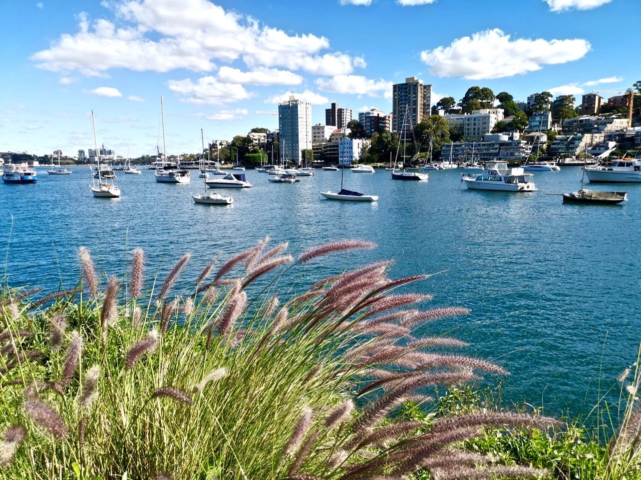 想要躲避北半球酷热的夏天,这时候来悉尼准没错 酷热难耐,别骗我,哭笑不得,想要,躲避 第3张图片
