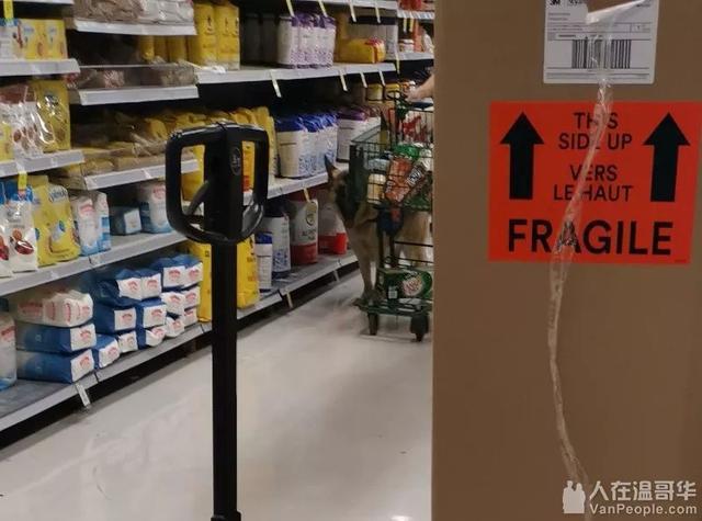 温哥华网友纷纷质疑:除了导盲犬,商场超市允许带大狗进入吗? ... 温哥华,网友,纷纷,质疑,除了 第8张图片