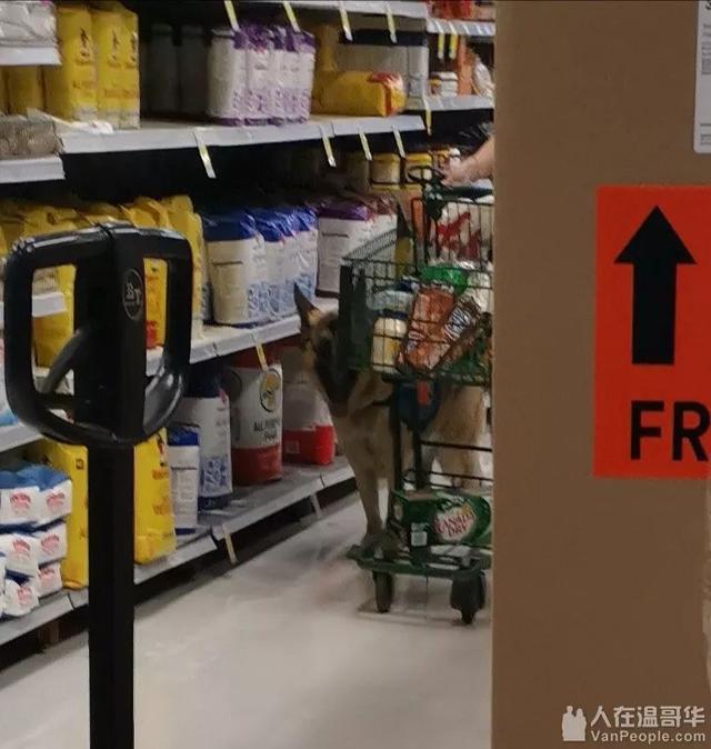 温哥华网友纷纷质疑:除了导盲犬,商场超市允许带大狗进入吗? ... 温哥华,网友,纷纷,质疑,除了 第9张图片