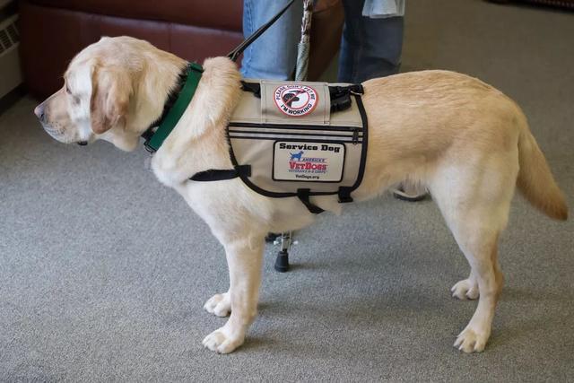 温哥华网友纷纷质疑:除了导盲犬,商场超市允许带大狗进入吗? ... 温哥华,网友,纷纷,质疑,除了 第14张图片