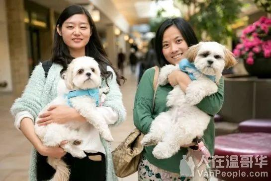 温哥华网友纷纷质疑:除了导盲犬,商场超市允许带大狗进入吗? ... 温哥华,网友,纷纷,质疑,除了 第17张图片