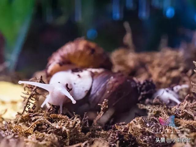 别吃!别碰!多地出现这种外来生物,接触或可传染致命疾病,你碰过吗? ... 小时,高兴,连续,出现,这种 第10张图片