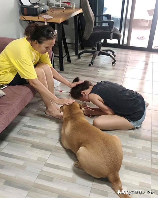 """""""泰暖心""""狗子:母亲节一起拜妈妈 泰暖心,母亲节,泰国习俗,狗子,一起 第1张图片"""