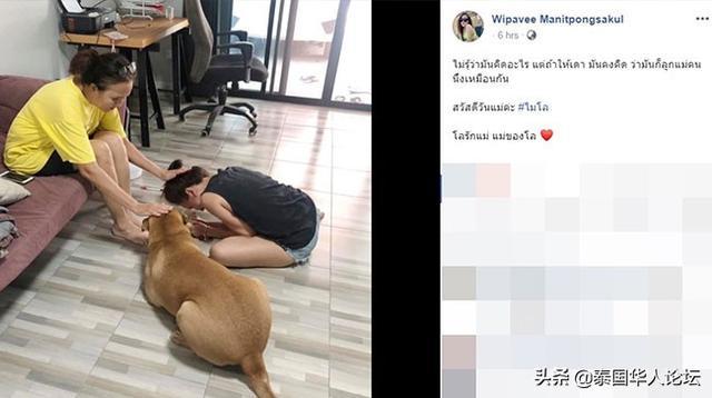 """""""泰暖心""""狗子:母亲节一起拜妈妈 泰暖心,母亲节,泰国习俗,狗子,一起 第2张图片"""