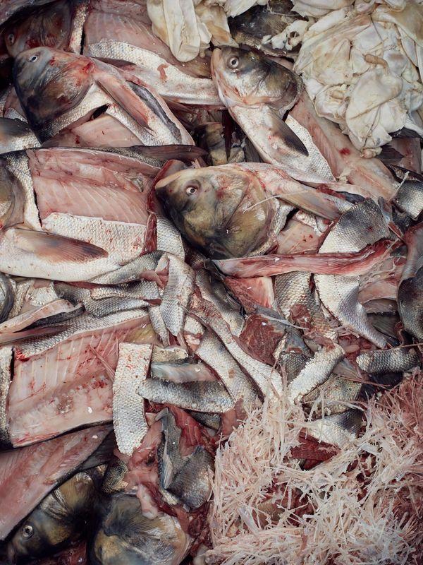 面对亚洲鲤鱼,美国人终于醒悟:不能打败它们,就吃掉它们 ... 面对,亚洲,亚洲鲤,亚洲鲤鱼,美国 第6张图片