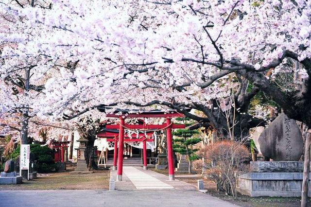 从日本人的生活习惯透视日本民族性!深度好文 日本,日本人,本人,的生活,生活 第1张图片