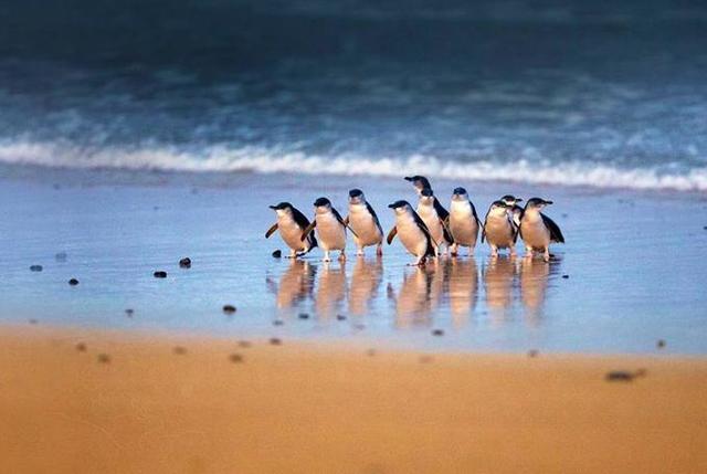 旅行攻略·墨尔本:企鹅,跳伞,热气球,墨尔本应有尽有 旅行,旅行攻略,攻略,墨尔本,企鹅 第5张图片
