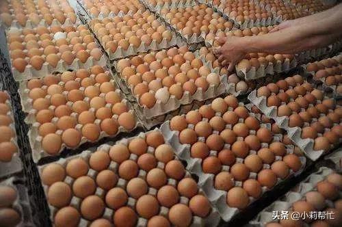 鸡蛋、白菜、西红柿…究竟什么样的好?全都告诉你 很多人,绿色的,年轻人,的地方,连接的 第3张图片