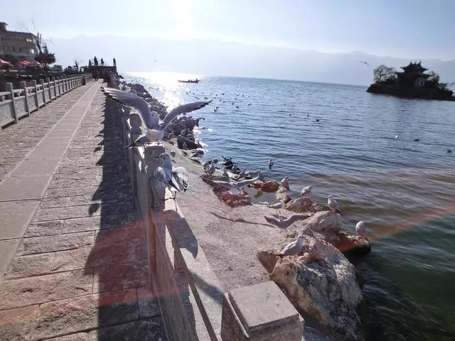 去过那么多次云南,唯独爱上了洱海 不知不觉,苍山洱海,彩云之南,第一站,蓝色的 第9张图片