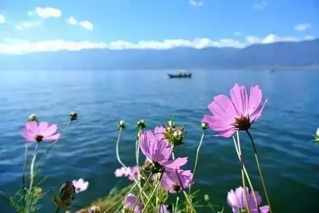 去过那么多次云南,唯独爱上了洱海 不知不觉,苍山洱海,彩云之南,第一站,蓝色的 第23张图片