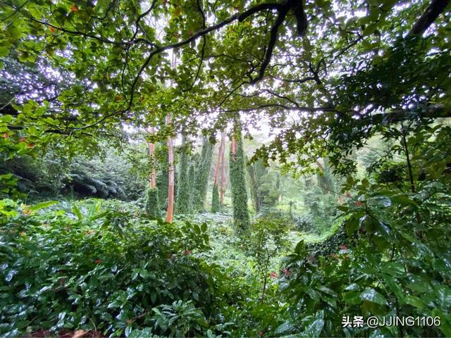 2020你好!夏威夷•欧胡岛DAY3-瀑布•热带雨林与大环岛 热带雨林,什么时候,檀香山,第一站,节假日 第1张图片