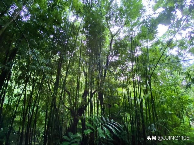 2020你好!夏威夷•欧胡岛DAY3-瀑布•热带雨林与大环岛 热带雨林,什么时候,檀香山,第一站,节假日 第2张图片