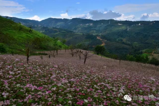 临翔南美大山里的美味野果,扎不住的诱惑 郁郁葱葱,山清水秀,生态系统,漫山遍野,错落有致 第1张图片