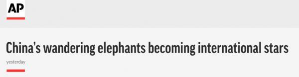 """锐参考 万万没想到,外媒的""""阴间滤镜""""居然被这群大象踩碎 第1张图片"""