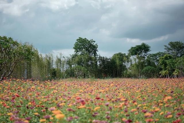 广州周边游丨奥游新兴,于禅意和山林间趣享喜来登 第52张图片